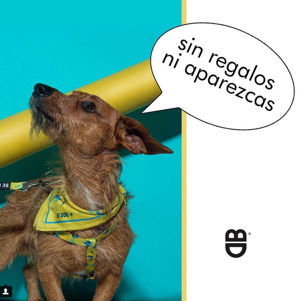 Be Dog 1