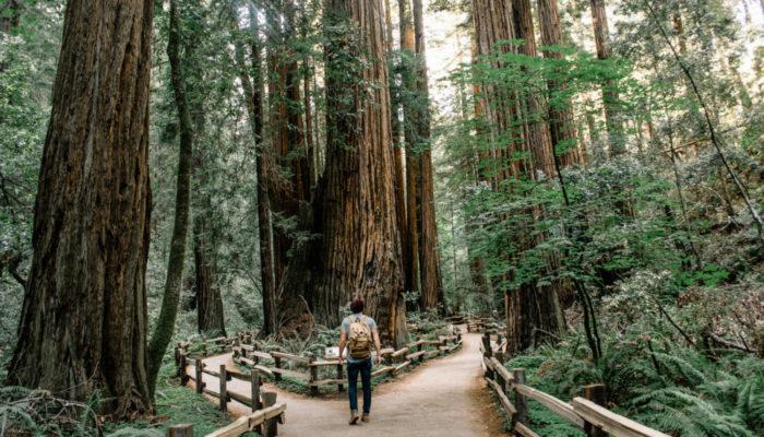 Homem em bifurcação em trilha em meio a árvores representa o teste ab