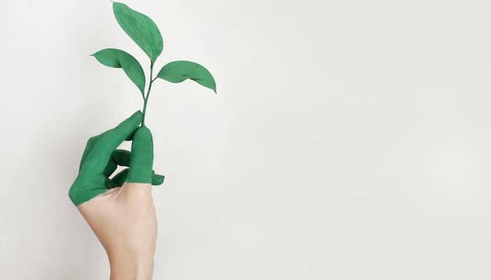 Mão pintada de verde segurando uma planta, representando o marketing social