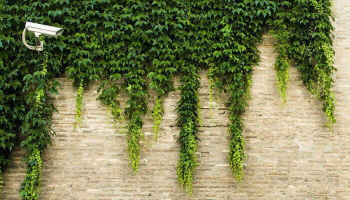 Muro com plantas e câmera de segurança, representando como proteger o e-commerce