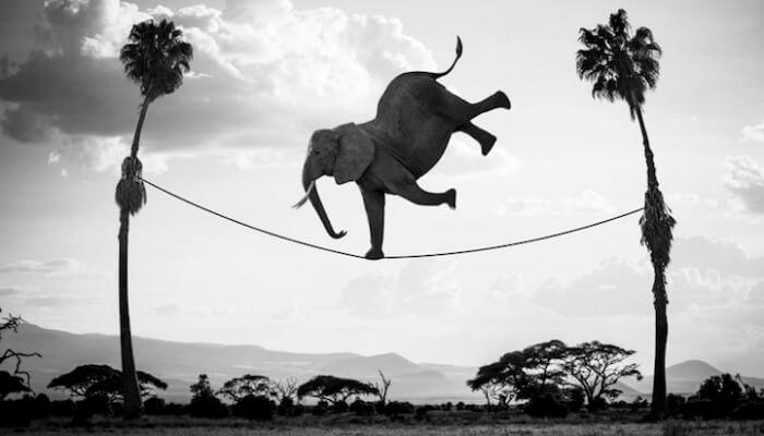 Montagem de elefante sobre corda suspensa representa o ponto de equilíbrio
