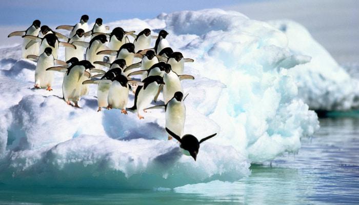 pinguins em fila