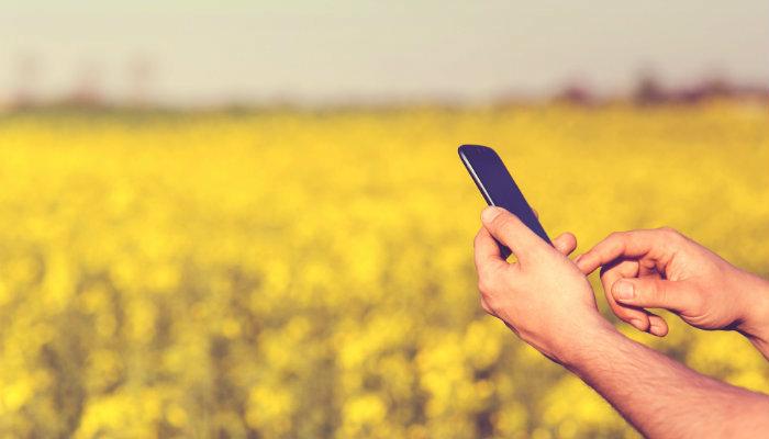 Mão segura smartphone em campo de flores, representando como bombar no Instagram